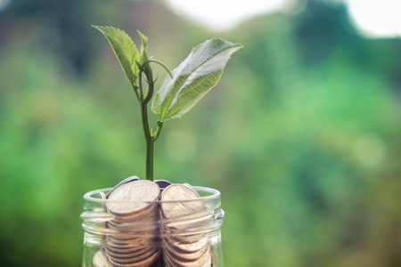 hojas de arbol: Brote que crece en la hucha de cristal en concepto de ahorro de dinero con efecto de filtro de estilo retro de la vendimia