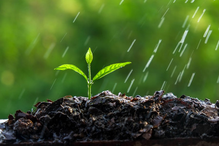 plant life: Green sprouts in the rain