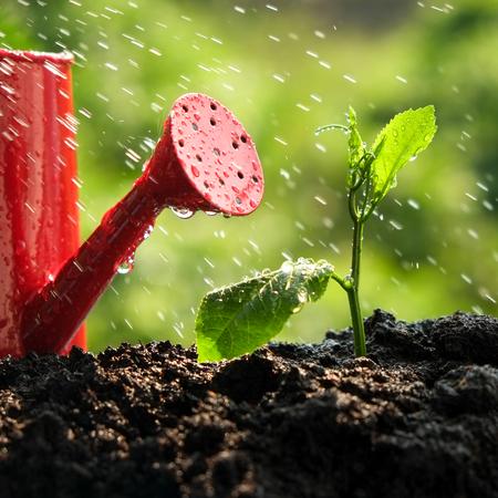 albero della vita: Germogli verdi sotto la pioggia