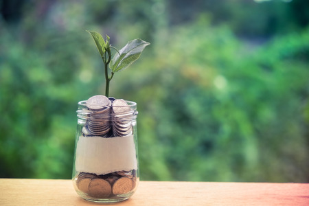 Sprout growing on glass piggy bank in saving money concept with filter effect retro vintage style Stockfoto