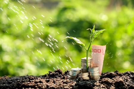 crecimiento: Concepto de crecimiento de las plantas Dinero que crece fuera de monedas