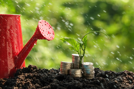 green environment: Money growth concept plant growing out of coins