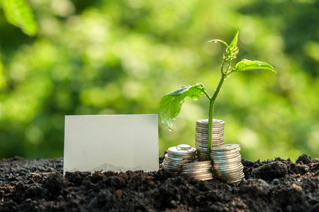 invest: Money growth concept plant growing out of coins