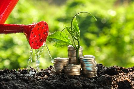 prosperidad: Concepto de crecimiento de las plantas Dinero que crece fuera de monedas