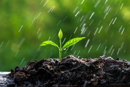 farm fresh: Green sprouts in the rain