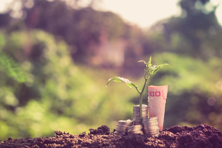 plant growing out of coins with filter effect retro vintage style Stock Photo