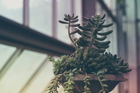 green house effect: cactus with filter effect retro vintage style Stock Photo