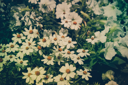 honey tone: flowers with filter effect retro vintage style