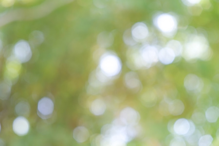 abstract background green boke Stock Photo