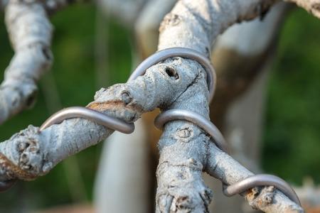 bonsai tree: Bonsai tree Wrapped wire Stock Photo