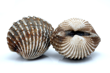 cockles: fresh cockles seafood on white background