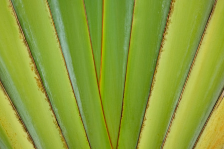 backgrounds: Banana leaf abstract backgrounds