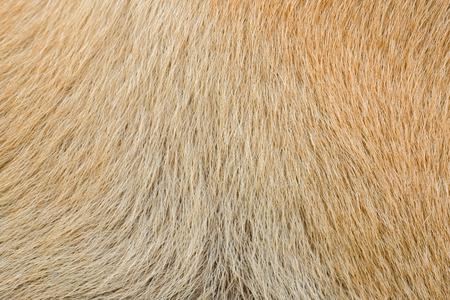 brownish: Wool background