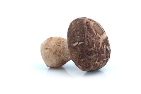 legumbres secas: Shiitake seta en el fondo blanco