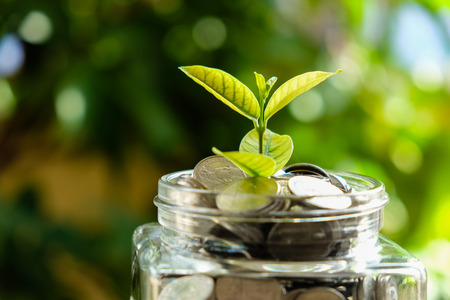 business finance save money for investment concept plant growing out of coins money Stock Photo