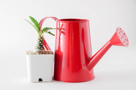 succulents or cactus in concrete pots over white background on the shelf Stock Photo
