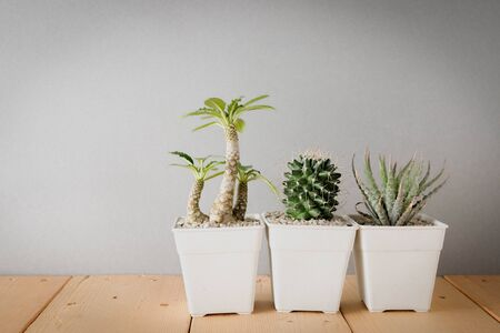 living room design: succulents or cactus in concrete pots over white background on the shelf Stock Photo