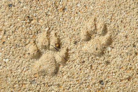 추상적 인 배경에 동물 발자국 토양의 균열 기후 변화와 가뭄 토지입니다.