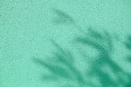 background shadow of the leaves on a white concrete wall Stock Photo