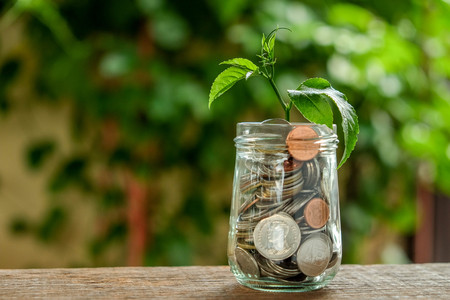 save money for investment concept. plant growing out of coins Zdjęcie Seryjne - 86816937
