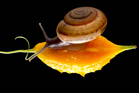 Snail isolated on black background Foto de archivo