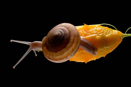 Snail isolated on black background Stock Photo
