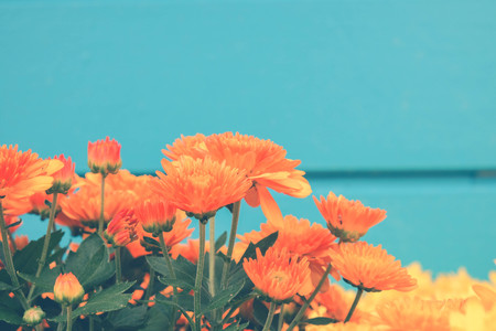 Flower background. Yellow orange flower in the garden with filter effect retro vintage style