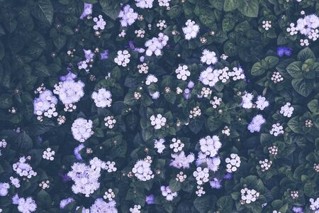 Flower background. Pink purple flower in the garden with filter effect retro vintage style