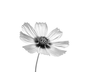 Flower background. flower in the garden with filter effect retro vintage style Standard-Bild