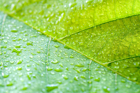 Soft Focus nature background texture green leaf with water drop. Stock fotó
