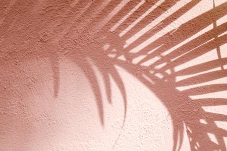 Textuer de fondo abstracto de hojas de sombras sobre un muro de hormigón Foto de archivo