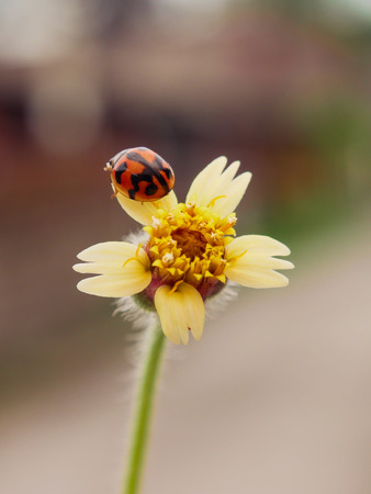 grass flowers and ladybug with filter effect retro vintage style