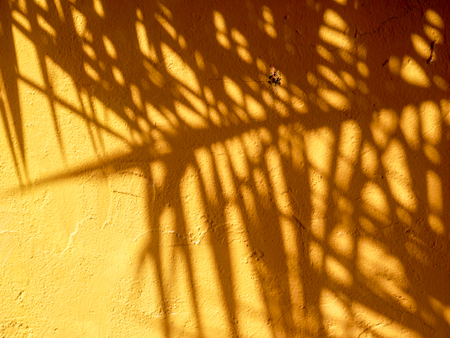 abstract background texture of shadows leaf on yellow concrete wall