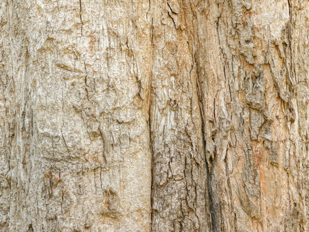 Tree bark wood texture abstract background Stock Photo
