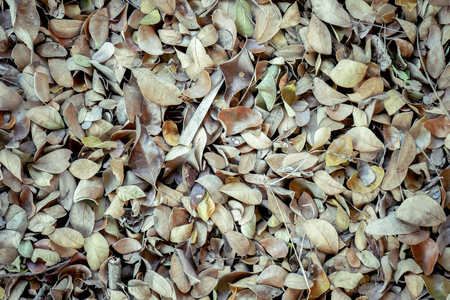 abstract background texture autumn fallen leaves on brown forest soil