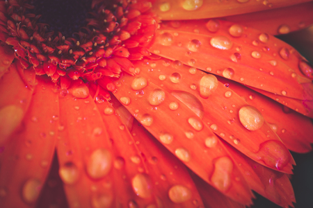 macro abstract background texture droplets on flower petals Stock Photo