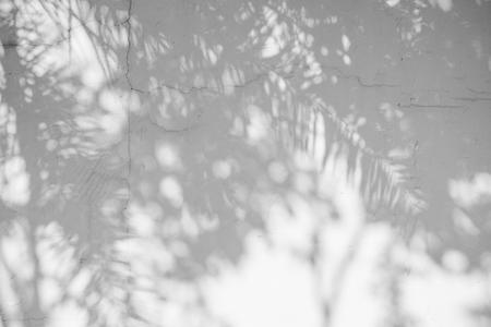 Abstrait noir et blanc textuer de feuille d'ombres sur un mur de béton Banque d'images