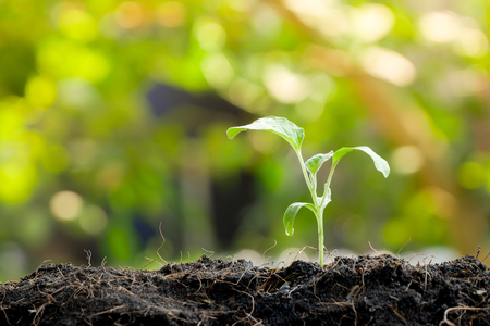 Grüner Spross, der aus Samen in organischem Boden wächst