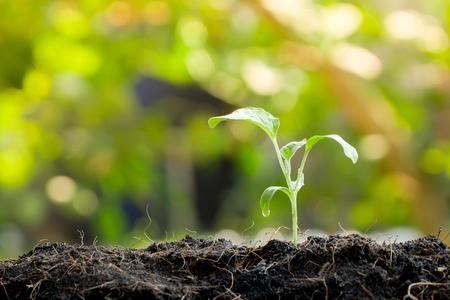 Pousse verte poussant à partir de graines dans un sol organique