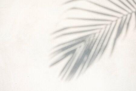 abstracte achtergrond textuur van schaduwen palmbladeren op een betonnen muur Stockfoto