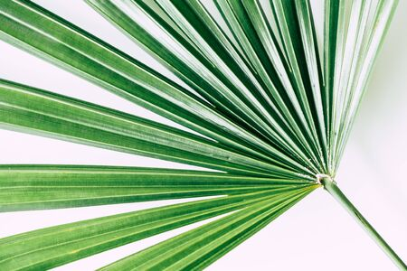 tropical plants on white background Stockfoto