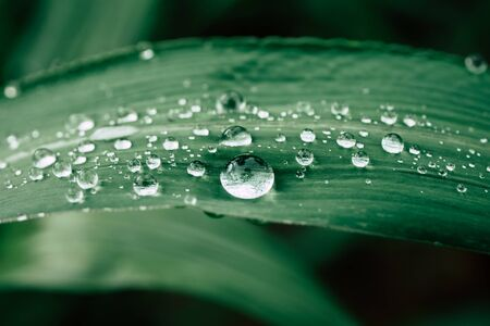 drops of water on the leaves. green nature background Banco de Imagens - 126069381