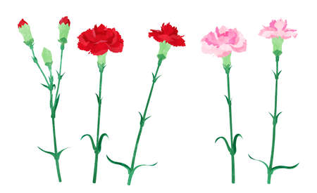 Illustration of red and pink carnations like watercolor