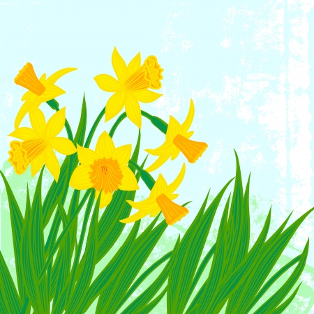 Vector card with daffodils on textured background. Template for Easter promotion, flower shop gift card, soap package, spring sale coupon, perfume box design, Mother's day card, wedding invitation Vector