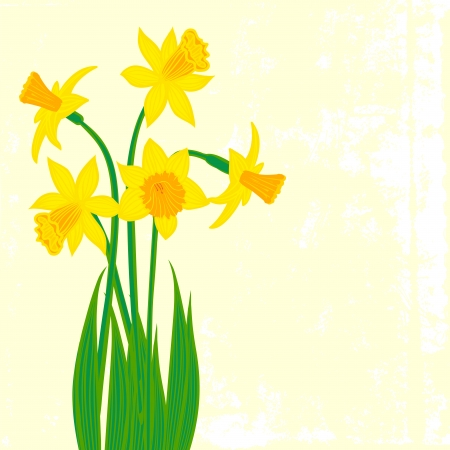 Vector card with daffodils on textured background. Template for Easter promotion, flower shop gift card, thank you note, spring sale coupon, perfume box design, Mothers day card, wedding invitation Vector