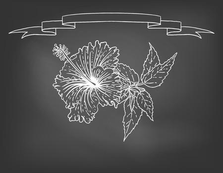Hand drawn vector illustration of hibiscus on blackboard. Concept image of tropical restaurant menu, cafe, coffee shop, tea house, aroma, perfume box design, herbal tea, caffeine free product