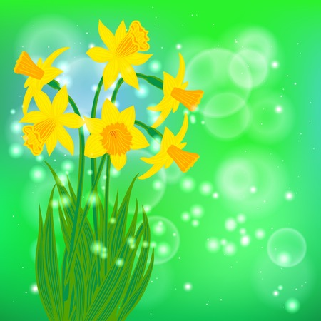 Vector card with daffodil on light green bokeh background.  Vector