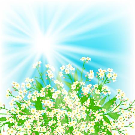 cartoline vittoriane: Scheda di vettore con piccoli fiori bianchi Vettoriali