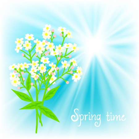 Vector card with small white flowers Vector