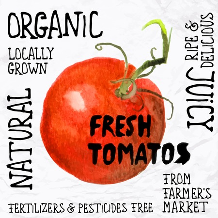 and organic: watercolor tomato Illustration